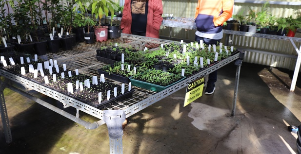 From seedling to sale. How students are part of the important process of plant growth